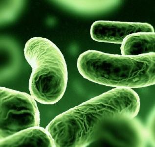 Microbi