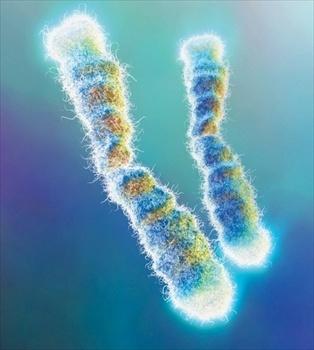 telomeri