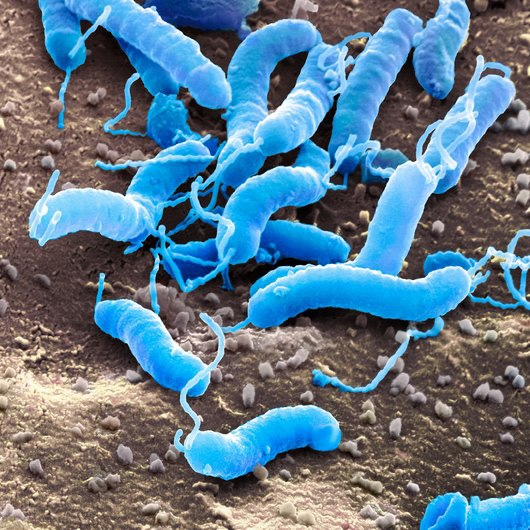 parassiti nelle immagini del corpo umano